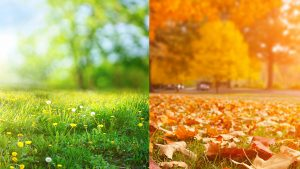 Graszoden leggen voorjaar of najaar