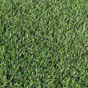 Kuypers Graszoden grasrollen grasmatten kopen 02