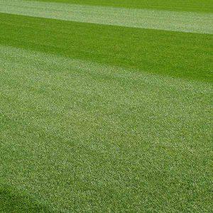 Kuypers Graszoden grasrollen grasmatten kopen 03