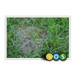Barenbrug SOS Lawn Repair herstel graszaad