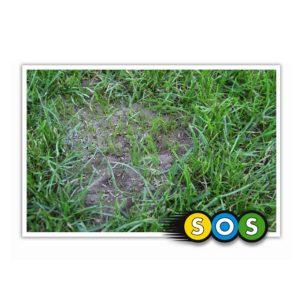 Barenbrug SOS Lawn repair herstel graszaad bijzaaien doorzaaien 02